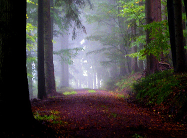 Touristic attractions of Germany : Black Forest (Schwarzwald)