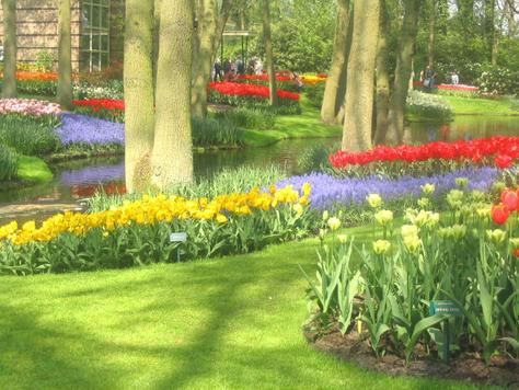 Touristic attractions of Saint Martin : Keukenhof Gardens
