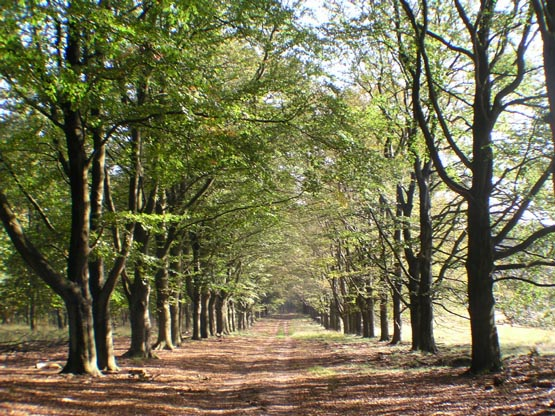 Touristic attractions of Saint Martin : Hoge Veluwe National Park