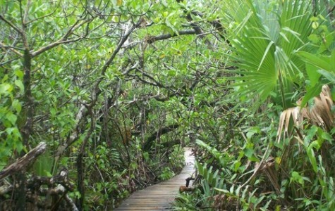 Touristic attractions of The Caribbean : Lucayan National Park, Bahamas