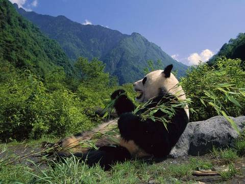 Touristic attractions of China : Wolong Nature Preserve