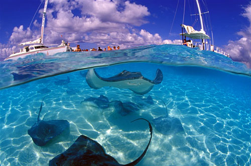 Touristic attractions of Cayman Islands : Diving in Grand Cayman