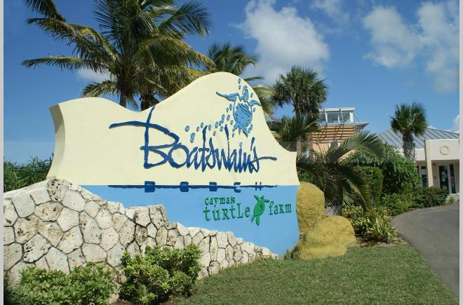 Touristic attractions of Cayman Islands : Turtle Farm
