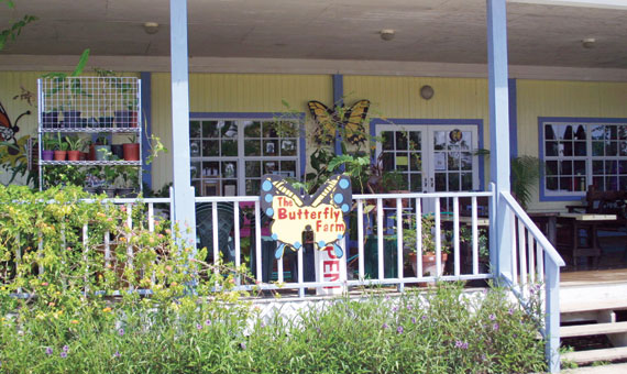 Touristic attractions of Cayman Islands : Butterfly Farm